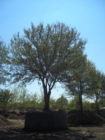 Tree Nursery Dallas Texas Great Trees